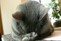 facepalm-cat.jpg